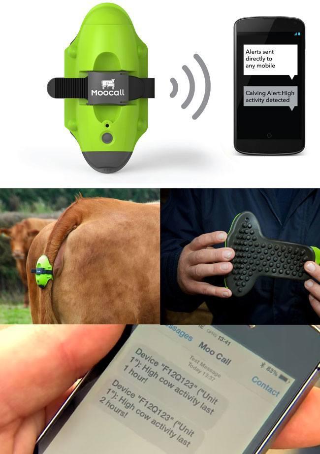 Wireless Calving Alert Sensors: Moocall