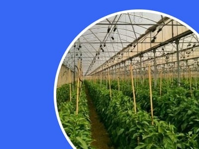 Smart Farming | 2019 Guide to IoT Agriculture Applications