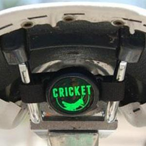 The Cricket Image