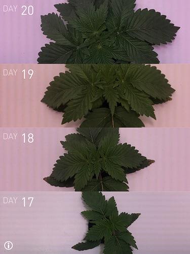 Grobo One Sequence