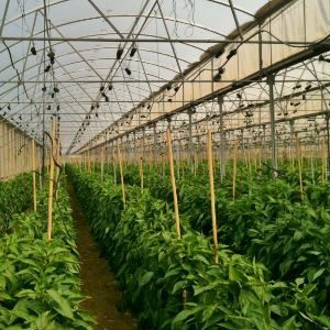 Smart Greenhouse Remote Monitoring Systems Image