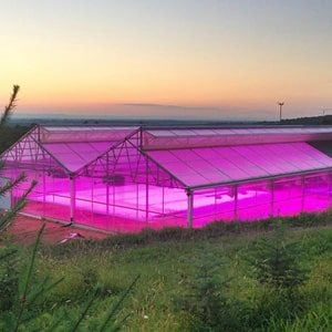 Case Study Lumigrow greenhouse