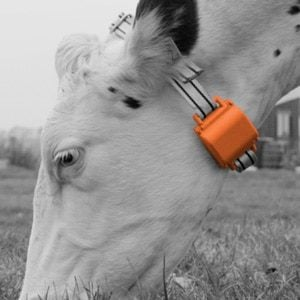 Cattle Tracking Systems 2019 Guide To Gps Ear Tags