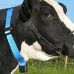 Wireless cattle tracker provider Silent Herdsman raises £3M Featured Image