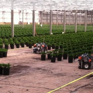 greenhouse spacing robots